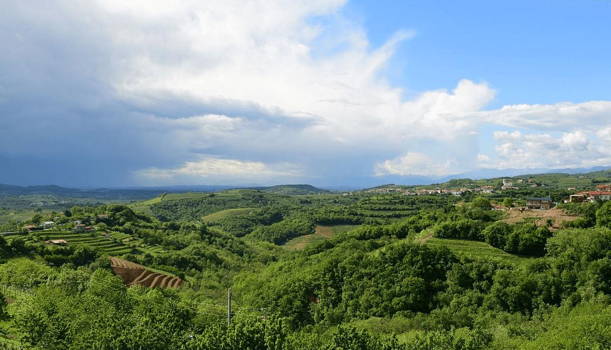 Views over Goriska Brda vineyards